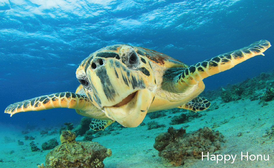 happy-honu